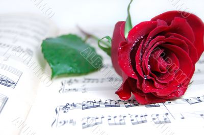 Loev and music