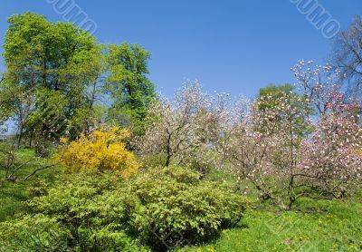 Botanical garden in the spring