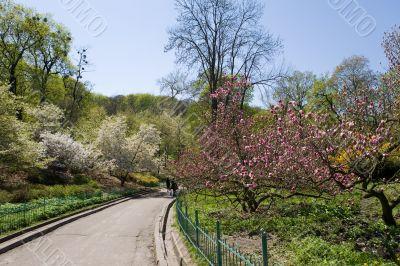 The Kiev Botanical garden