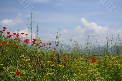 idyllic rural scene with bright meadow