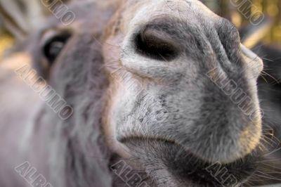 Donkeys nose