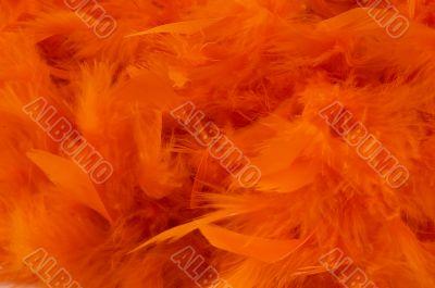 orange boa background