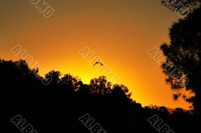 herron in sunset