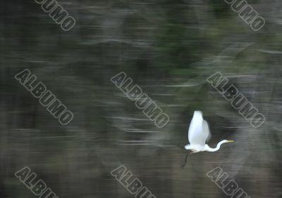 arty heron