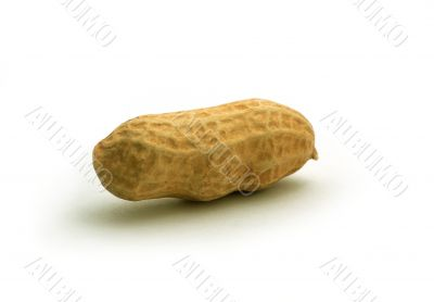 Peanut in shell isolated on a white background
