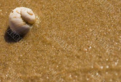 Sea shell on a sea shore