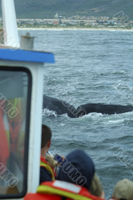 Tourists watching on boat a southern right whale
