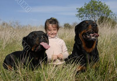 dangerous dogs and child