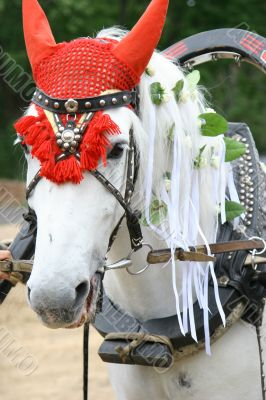 White horse in a harness
