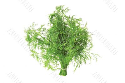 Bunch of fennel