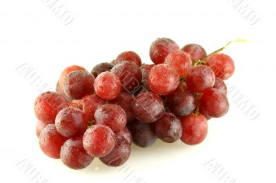 Bunch of grape with water drops