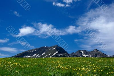 nice rural landscape with a field of flowers