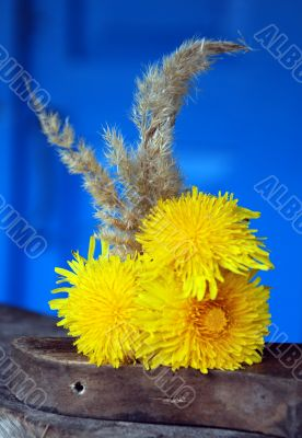 yellow flowers dandelions  on the piece of wood on a background