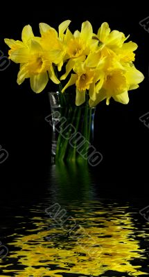 Bouquet of narcissuses in a transparent vase