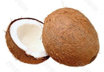 Appetite cocoa