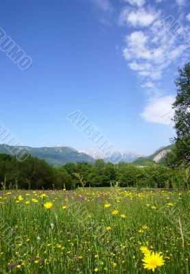 tranquil rural scene with a meadow, forest