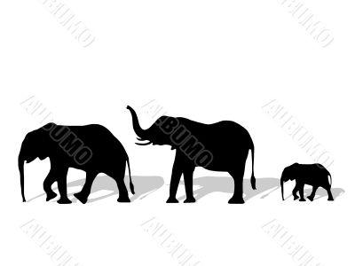 Group of elephant