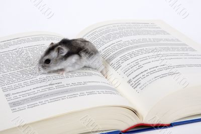 Mouse reads