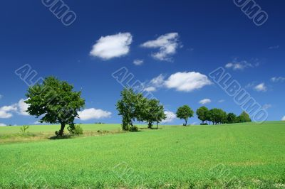 blissful summer landscape with tree line