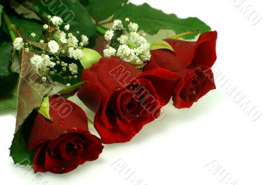floral composition with three nice red roses