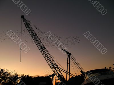 Crane against a setting sun with starlings