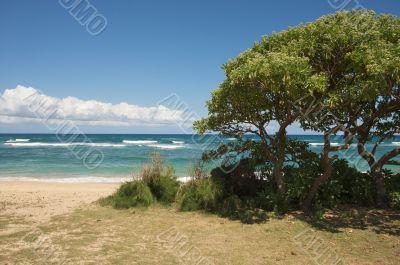 Inviting Tropical Shoreline