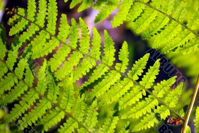 Bracken with backlight