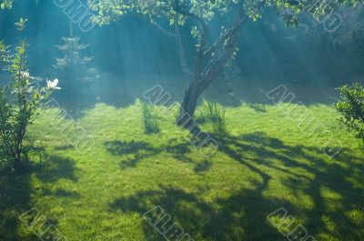 fog, sun and peaceful garden