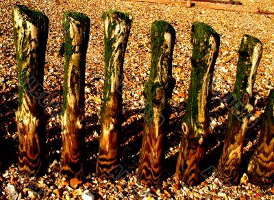 weathered groyne posts