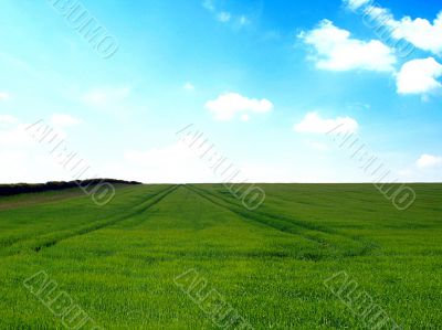 english countryside and summer cloudy sky