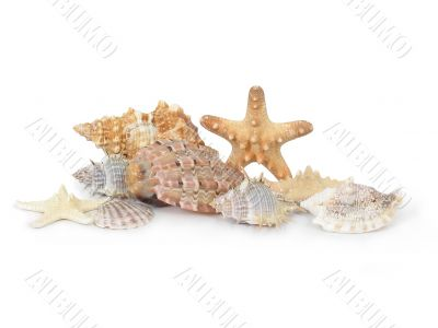 A composition made from shells and starfishes - 1