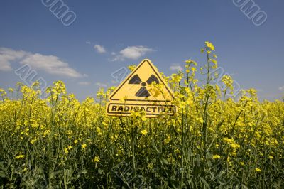 rape field with sign radio-active