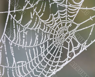 icy spider web