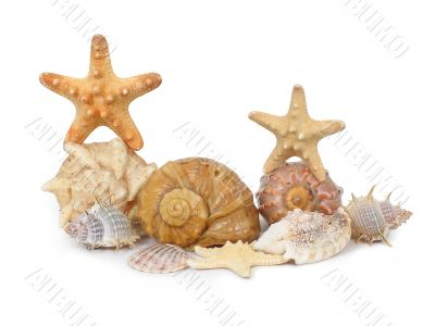 A composition made from shells and starfishes - 3