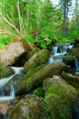 Small falls in a wood. Landscape.