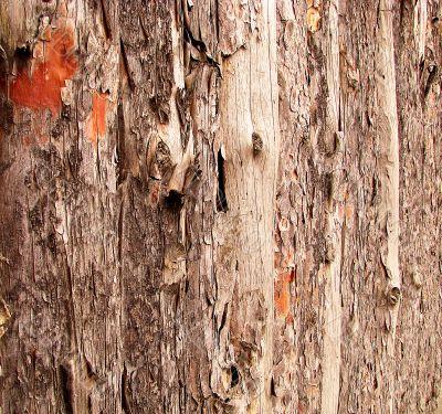 Wood bark detail, nature