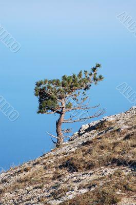 The sky, rocks, a pine and a hillside