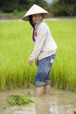 Work on the rice field, Laos