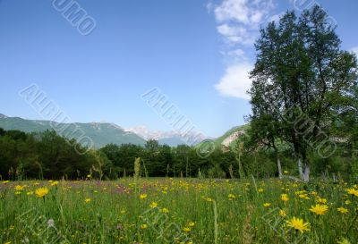 tranquil rural scene with meadow and mountains
