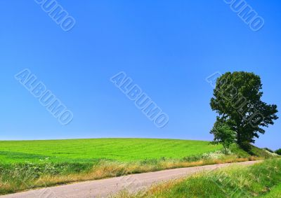 picturesque country road and lone tree