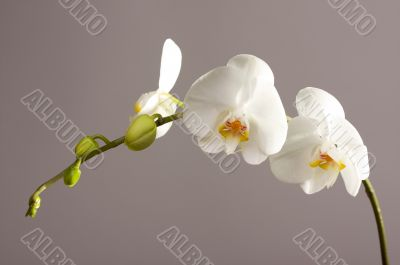 Beautiful Orchid Branch Blossom