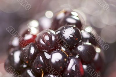 Macro Blackberry with Water Drops