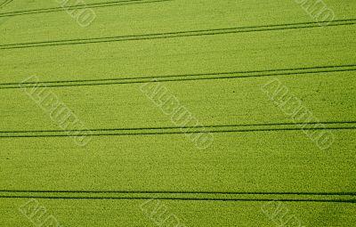 Cornfield, Aerial Photo