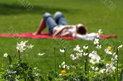 summer, rest, relaxation, picnic, flower