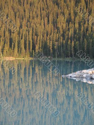 calm lake and forest