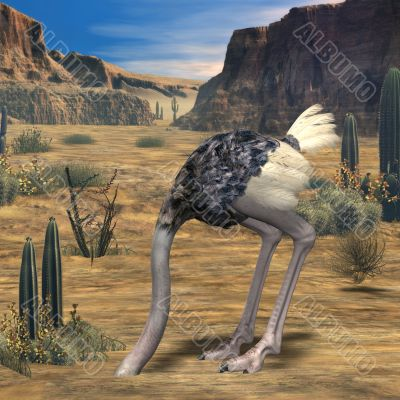 Ostrich-3D Animal