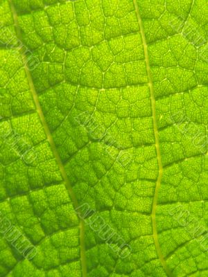 Emerald leaf texture