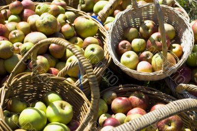 Organic apples in baskets