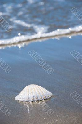 Sea shell on sand