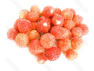 Forestry strawberries